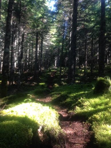Magnifique trail!